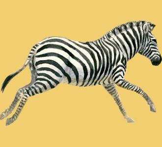 Ein Steppentier von der Art zebra aufnehmen