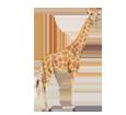 Giraffe - Fell 34