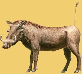 Ein Steppentier von der Art warzenschwein aufnehmen