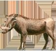 Warzenschwein - Fell 17