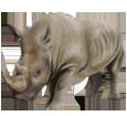 Nashorn - Fell 52