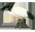 Ibis - Fell 65