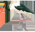 Afrikanischer Jabiru - Fell 34
