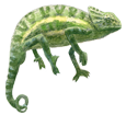 Afrikanische Chamäleon - Fell 72