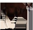 Okapi - Fell 5