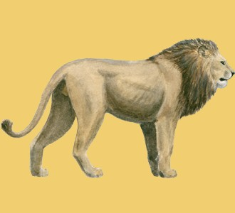 Ein Steppentier von der Art löwe aufnehmen