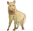 Gestreifte Hyene - Fell 1000000034