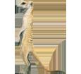 Erdmännchen - Fell 2