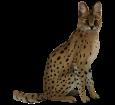 Serval - Fell 46