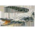 Krokodil - Fell 66